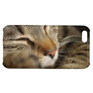 cat iPhone 5C case