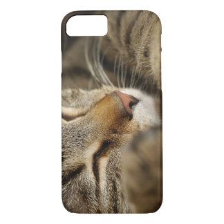 cat iPhone 8/7 case