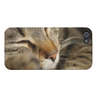 cat iPhone SE/5/5s case