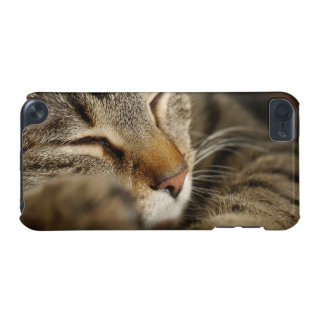 cat iPod touch (5th generation) cover