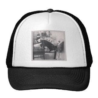 Cat is caught guilty trucker hat