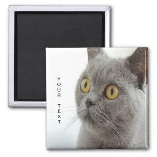 Cat is cute magnet