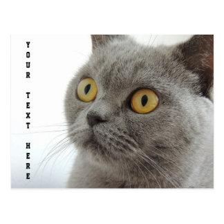 Cat is cute postcard