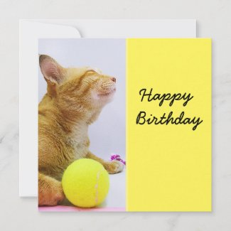 Cat is playing tennis ball birthday card
