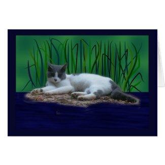 Cat Island card