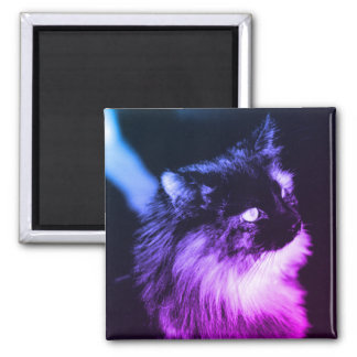 Cat King of the Shelter - Purple Magnet