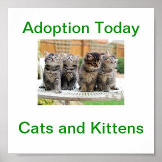 Cat & Kitten Adoption Today Sign Poster