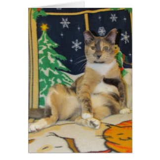 Cat, Kitten, Christmas, Rescue, Photo Card