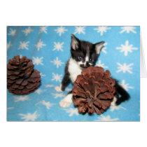 Cat, Kitten, Christmas, Rescue, Photo Card
