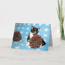 Cat, Kitten, Christmas, Rescue, Photo Holiday Card