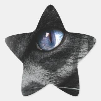 Cat Kitten Eye Stare Look Animal Star Sticker