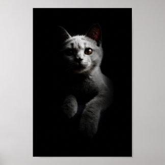 Cat/Kitten/Kitty Portrait Poster