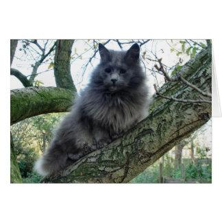 Cat 'Kyra' in a tree Card