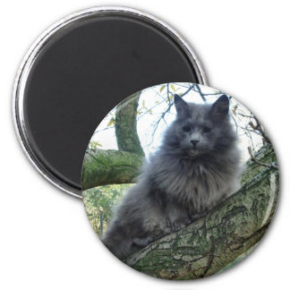 Cat 'Kyra' in a tree Magnet