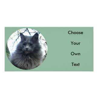 Cat 'Kyra' in a tree Picture Card
