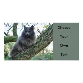 Cat 'Kyra' in a tree Customized Photo Card