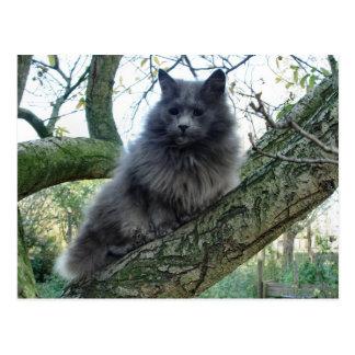 Cat 'Kyra' in a tree Postcard