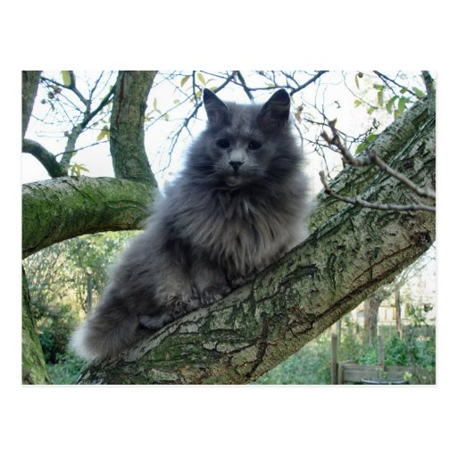 Cat 'Kyra' in a tree Post Cards