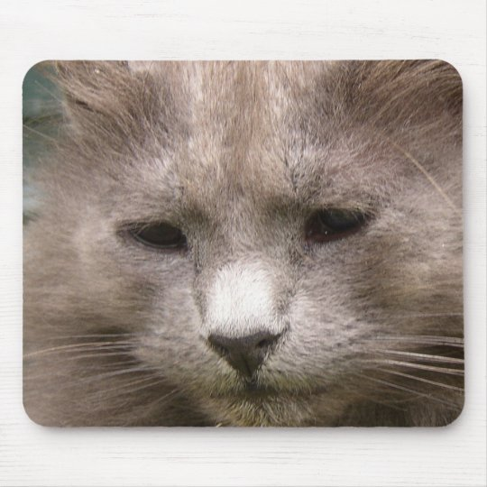 Cat 'Kyra' portrait Mouse Pad
