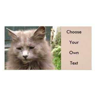Cat 'Kyra' portrait Customized Photo Card