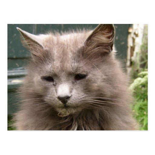 Cat 'Kyra' portrait Postcard