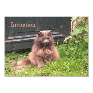 Cat 'Kyra' sitting in the grass Card