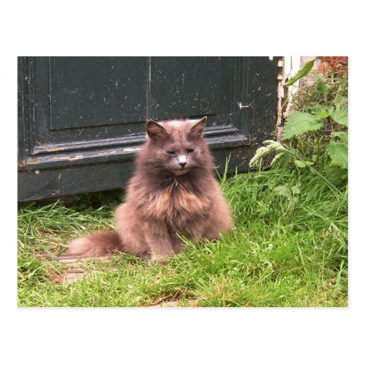 Cat 'Kyra' sitting in the grass Post Cards