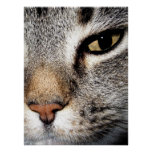 Cat (larger) print