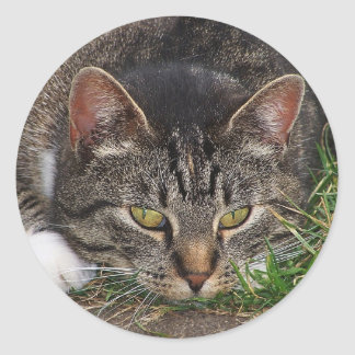 Cat Laying Down Sticker