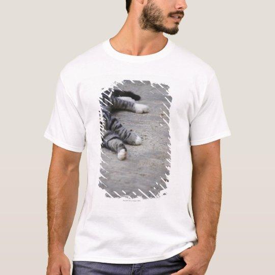 Cat laying on sidewalk T-Shirt