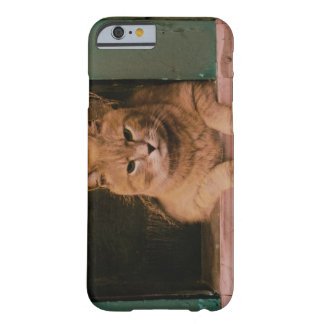 Cat Leans on Windowsill Barely There iPhone 6 Case