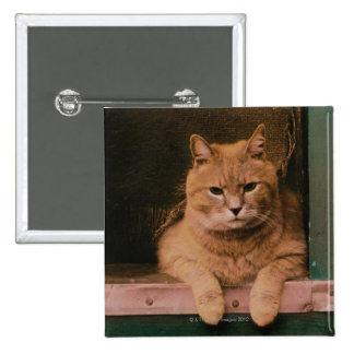 Cat Leans on Windowsill 2 Inch Square Button