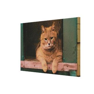 Cat Leans on Windowsill Canvas Print