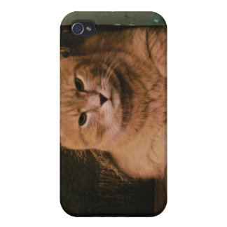Cat Leans on Windowsill iPhone 4/4S Cover