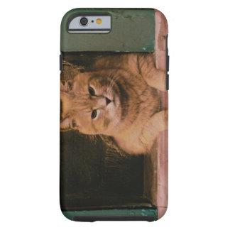 Cat Leans on Windowsill Tough iPhone 6 Case