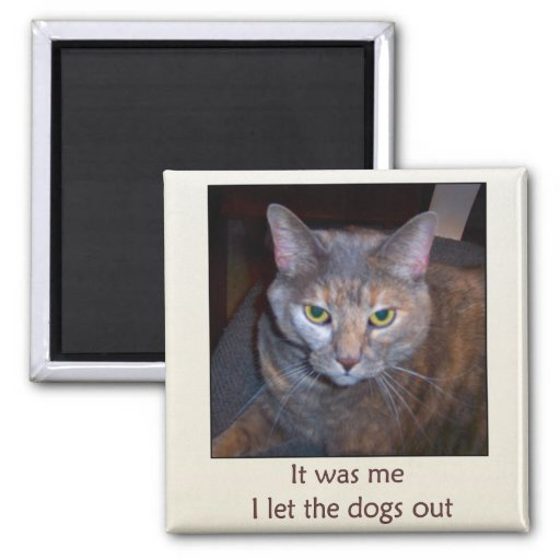 Cat Let The Dogs Out Magnets