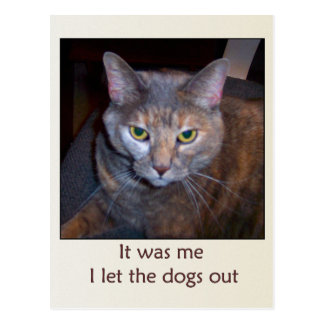 Cat Let The Dogs Out Postcard