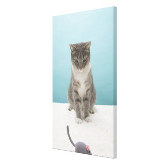 Cat looking at toy mouse on rug canvas print