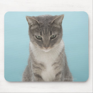 Cat looking at toy mouse on rug mouse pad