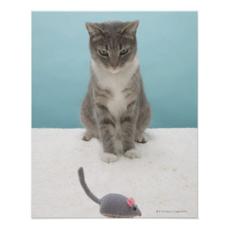 Cat looking at toy mouse on rug poster