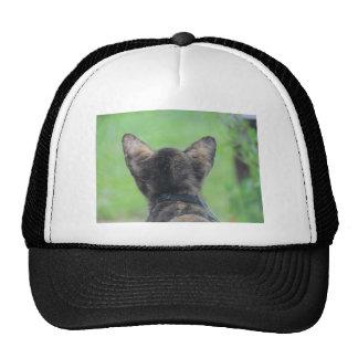Cat Looking on Trucker Hat
