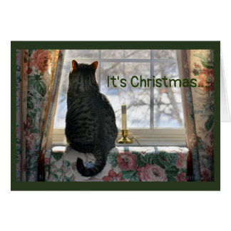 Cat Looking Out Window at Snow Card