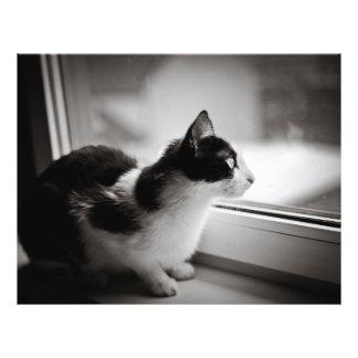 Cat looking outside flyer