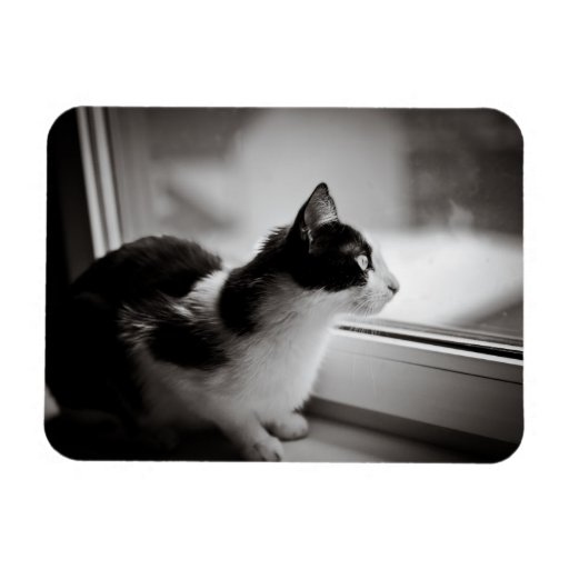 Cat looking outside rectangular photo magnet