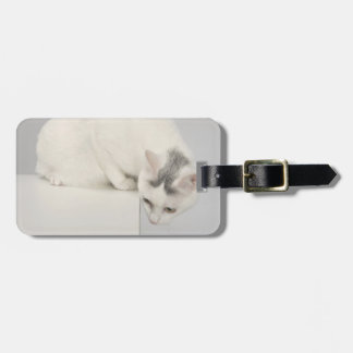 Cat looking over an edge bag tag