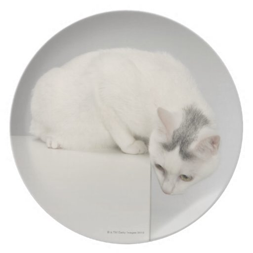 Cat looking over an edge dinner plate