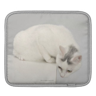 Cat looking over an edge sleeve for iPads