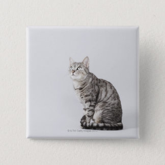 Cat looking up pinback button