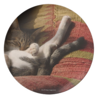 Cat Lounging Plate