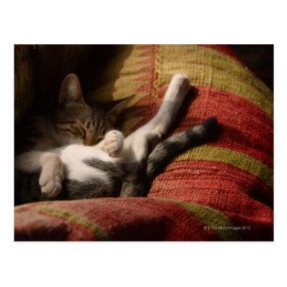 Cat Lounging Postcard
